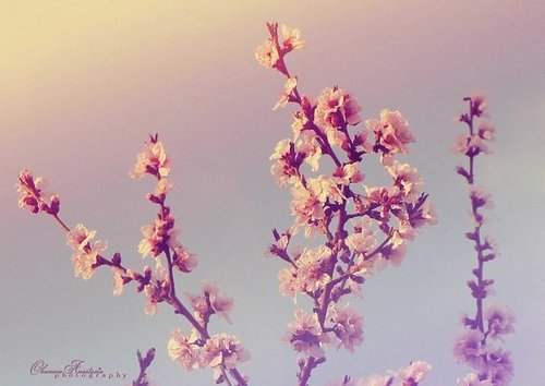 Spring_flowers_by_vanillaboom-d42g97x_large