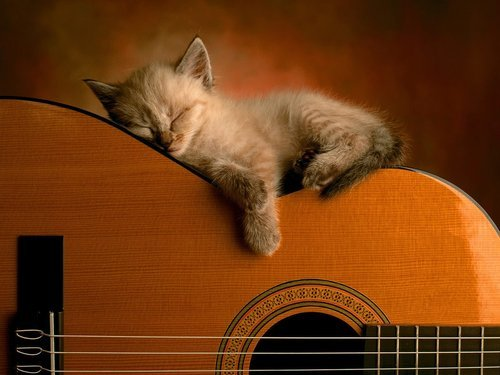 Cat_sleeping_in_guitar_10308_1600_1200_large_large