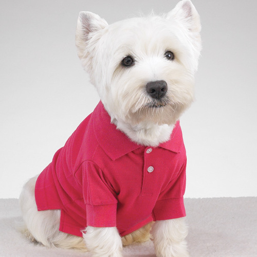 Fancy   Preppy Puppy Dog Polo dog shirt
