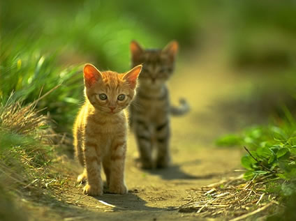 -cat-cute-kitty-little-favim.com-119973_large
