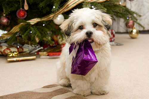 Christmas-cute-dog-god-puppy-favim.com-120492_large