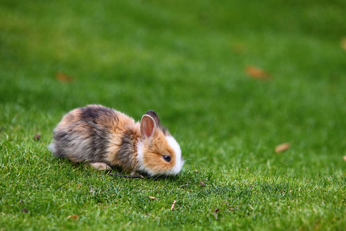 Baby_bunny_01_by_spike83_large