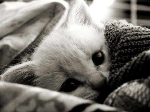 ~ : | Kittens | : ~