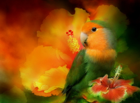 Multicolor parrot   Other Wallpaper 753087   Desktop Nexus Nature