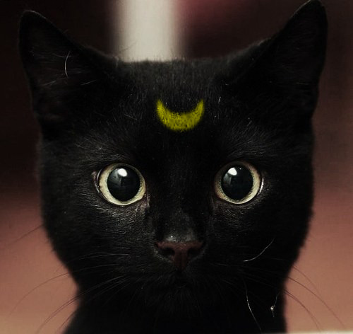 black cat, luna, moon, sailor moon - inspiring picture on Favim.com