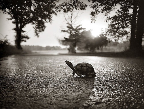 D,_,b,turtle,turtle,turtle,animal,b,w,black,and,white-46379280fd846e05506419d64c16aa98_h_large