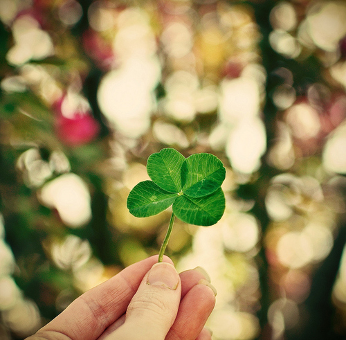 Bokeh-clover-cute-four-good-good-luck-favim.com-54750_large