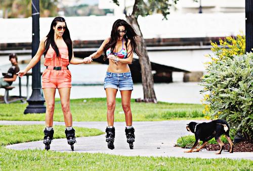 Dog-funny-kardashians-kim-kardashian-kourtney-favim.com-126463_large