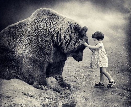 animal, baby, bear, black, black and white - inspiring picture on Favim.com