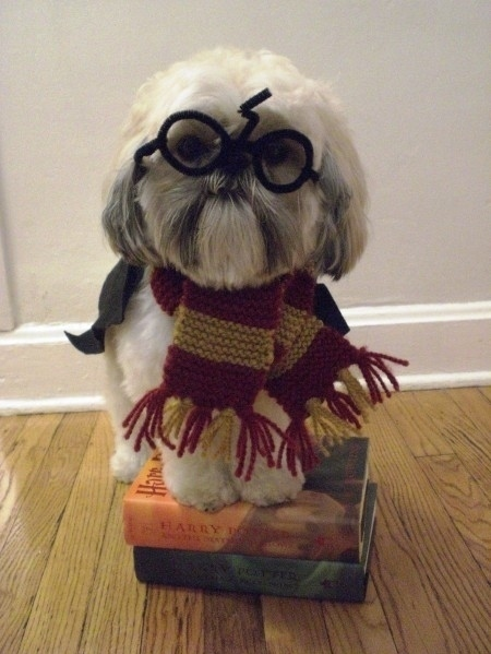 Books-cute-dog-harry-potter-harry-potter-books-favim.com-127577_large