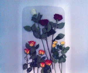 roses frame flower water