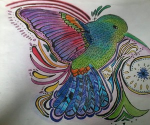 colibrí aves colors draw
