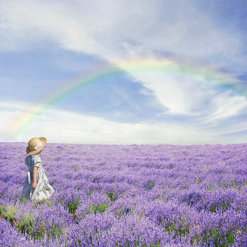 Campo-lavanda-arco-iris_large