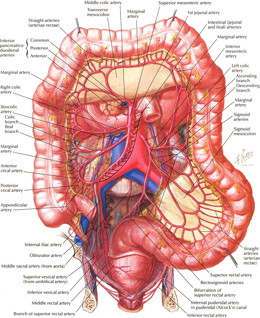 Function Of Large Intestine In Human Body Human Anatomy