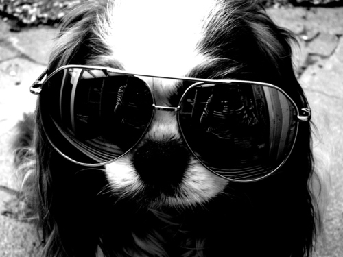 Animal-cute-dog-fashion-hard-rock-pet-favim.com-46268_large