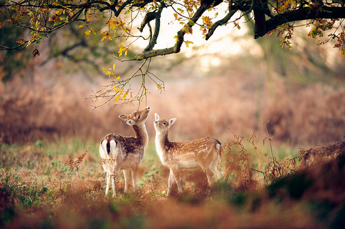 Andrew-evans-animal-animals-bambi-cute-favim.com-130140_large
