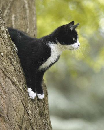 cat - Google Images