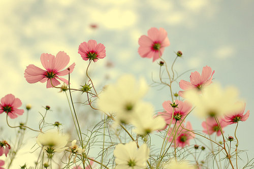 Gorgeous-flowers-photo_large