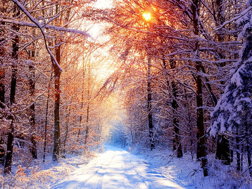 Winter-forest-2_large