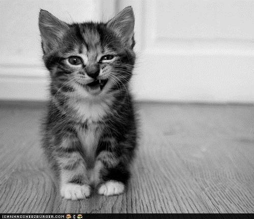 Black-and-white-cat-cute-kitty-photo-favim.com-135199_large