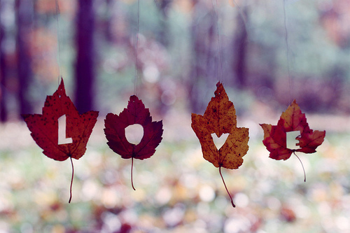 Autumn-bokeh-leaves-love-favim.com-114658_large