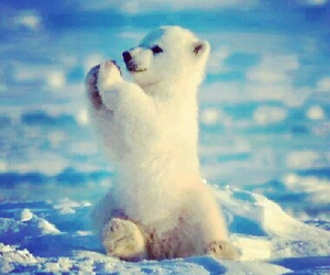 Image result for l'ours blanc cute