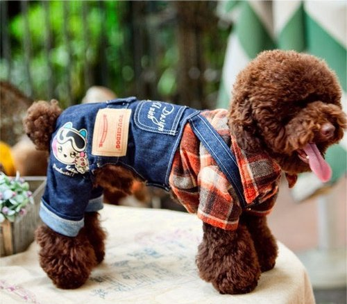 Dog Clothes and Costumes