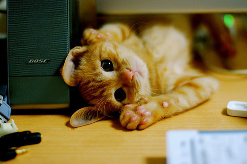 Cat-cute-igottapeenow.tumblr.com-kitty-orange-favim.com-101600_large