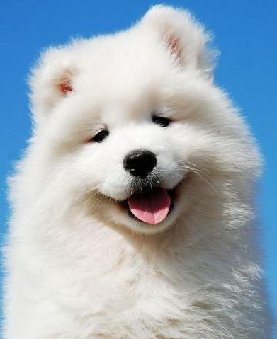 Cachorrinho-fofinho_large