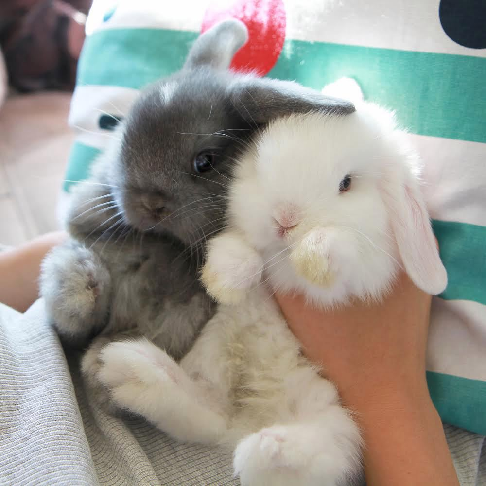 Too cute almost don't look real | We Heart It | rabbit ...