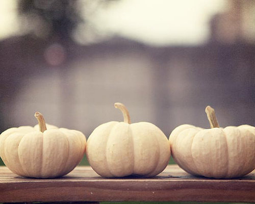 Ghost Pumpkins Fall Photograph Print by AmeliaKayPhotography