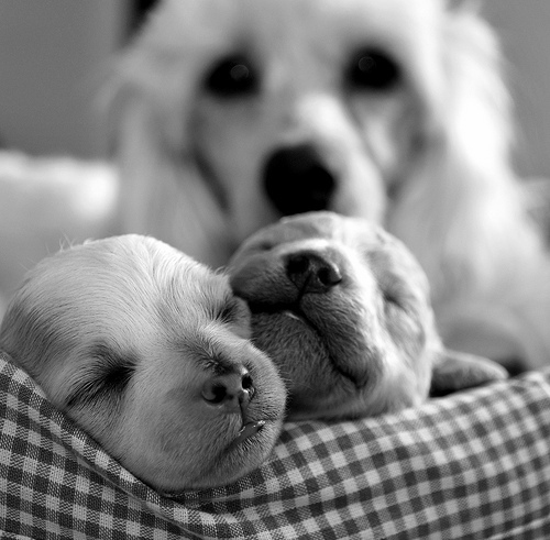 Cachorrinhos_large
