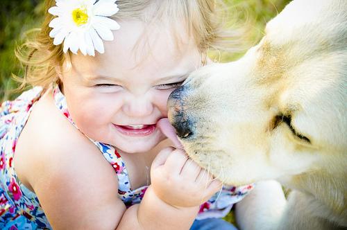 Cachorro-carinho-bebe_large