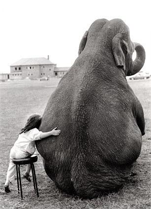Elefante_large