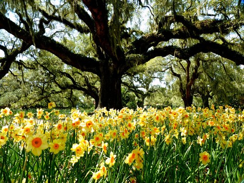 Brookgreen+spring+oaks+edit_large