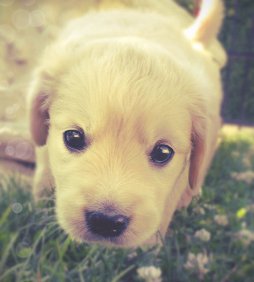 http://data.whicdn.com/images/14993030/puppy_eyes_by_ihaveseentherain-d4a4il9_large.jpg