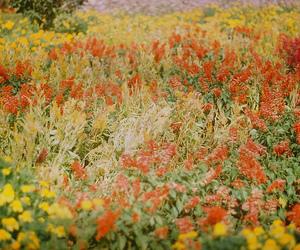 flowers analog
