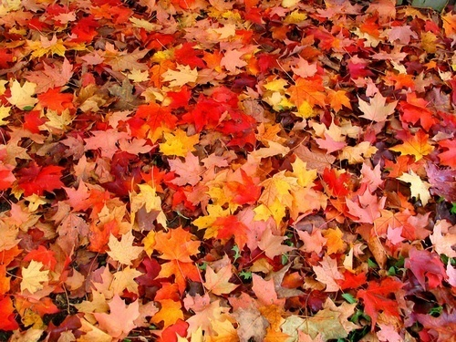 http://data.whicdn.com/images/15070898/autumn-road-maple-leaves-31000_large.jpg