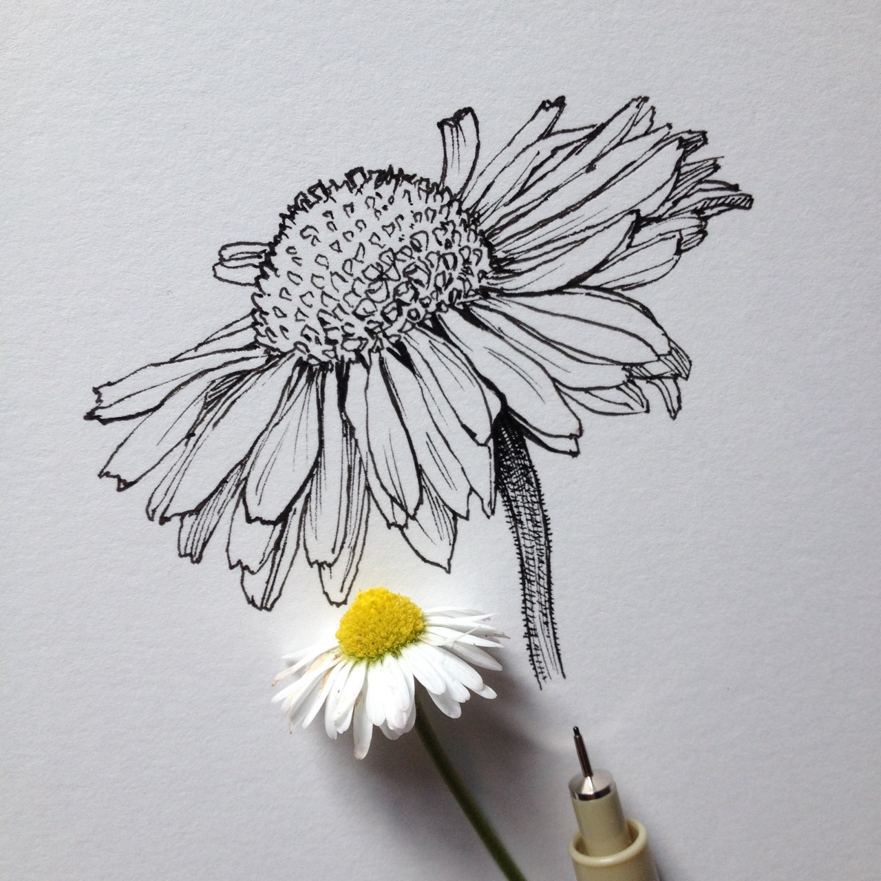 Eletragesi daisy tumblr drawing images daisy tumblr drawing izmirmasajfo