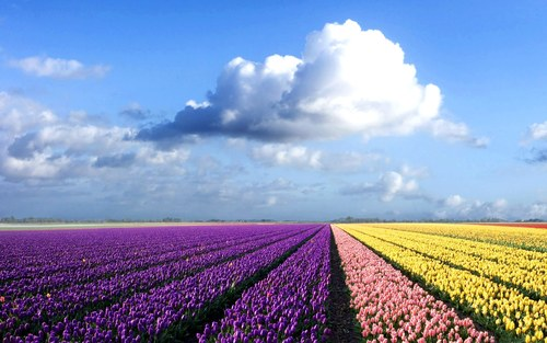 Colorful-flower-field_1920x1200_71912_large