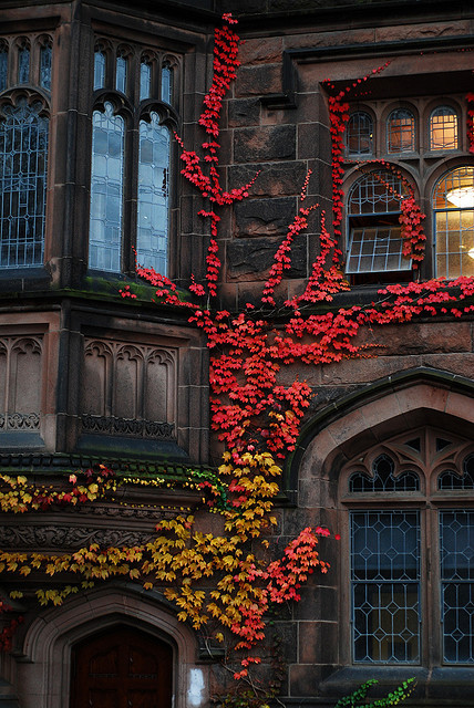 Ivy in the Autumn | Flickr - Photo Sharing!