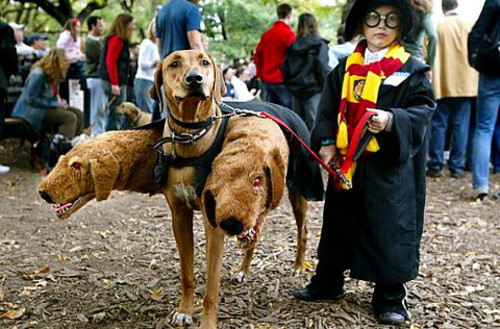 3-head-dog-costume-harry-potter-inocence-favim.com-115890_large