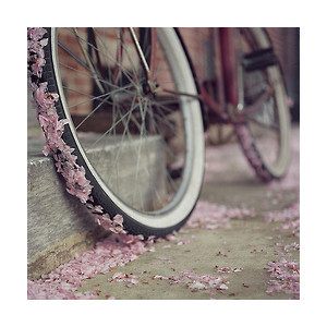 lovely photos - Polyvore