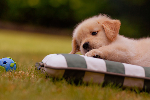 cute, dog, pet, puppy - inspiring picture on Favim.com