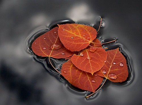 Autumn,leaf,puddle,reflections,water,nature-bf5bdbad905a67b1f61f7e6870cbc96d_h_large