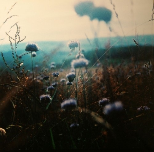 art, atmosphere, blue, blur, bruising nature, champ - inspiring picture on Favim.com