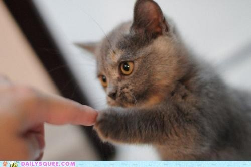 cat%2Cconnected 589892b4777a7f26bb996a628d8e3a49 h large cute animals   CUTEST. FIST BUMP. EVER. picture on VisualizeUs