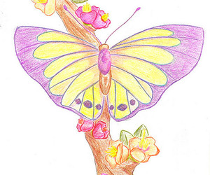 butterfly draw