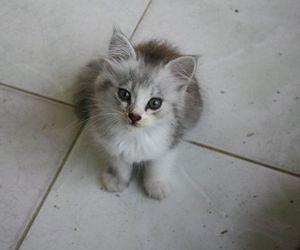 cat kitten cute