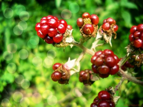 Berries_by_wannw-d48116m_large